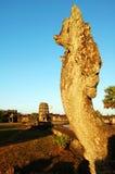 Het hoofd van Naga in Angkor Wat Royalty-vrije Stock Afbeelding