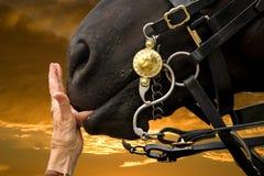 Het hoofd van paarden Stock Fotografie