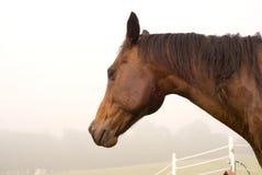 Het hoofd van paarden Royalty-vrije Stock Fotografie