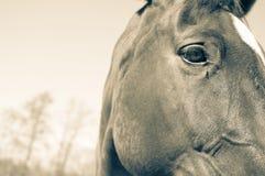 Het hoofd van paarden en achtergrond Stock Foto's