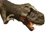 Het Hoofd van Rex van tyrannosaurussen Royalty-vrije Stock Fotografie