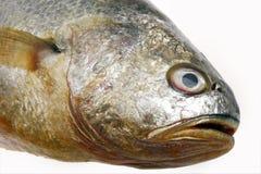 Het hoofd van verse vissen Stock Afbeelding