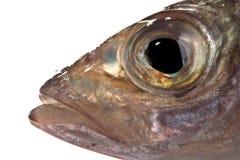 Het hoofd van vissen Stock Foto's