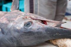 Het Hoofd van zwaardvissen, Argostoli haven, Kefalonia, September 2006 Royalty-vrije Stock Fotografie