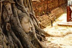 Het hoofd is verborgen in de banyan boom royalty-vrije stock afbeeldingen