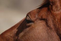 Het hoofddetail van het paard Stock Foto