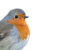 Het hoofddieprofiel van Robin op witte achtergrond wordt geïsoleerd Royalty-vrije Stock Foto's