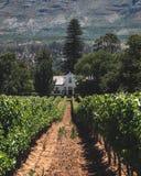 Het hoofdhuis van het wijnlandbouwbedrijf in wijngaarden stock fotografie