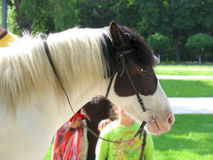 Het hoofdprofiel van het paard met childs op achtergrond royalty-vrije stock afbeeldingen