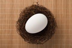 Het hoogste ei van de meningsgans op nest Stock Afbeeldingen