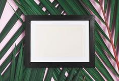 Het hoogste kader van de menings lege zwarte foto op groen palmblad op pastelkleur pi royalty-vrije stock foto