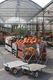 Het hoogtepunt van bakken van pompoenen bij de markt van de landbouwer Royalty-vrije Stock Afbeeldingen