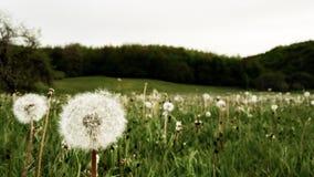 Het hoogtepunt van de de lenteweide van bloemen royalty-vrije stock foto's