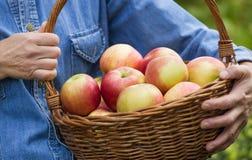 Het hoogtepunt van de mand van appelen royalty-vrije stock foto