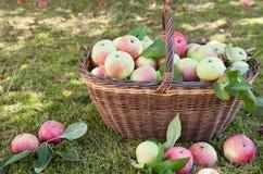Het hoogtepunt van de mand van appelen stock afbeelding