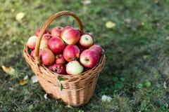 Het hoogtepunt van de mand van appelen Stock Foto