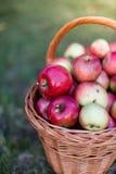 Het hoogtepunt van de mand van appelen Royalty-vrije Stock Fotografie