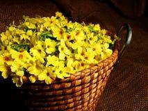 Het hoogtepunt van de mand van gele sleutelbloembloesems Stock Foto's