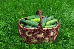 Het hoogtepunt van de mand van komkommers Royalty-vrije Stock Foto
