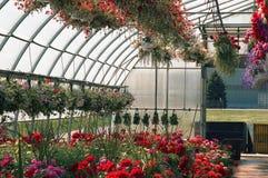 Het hoogtepunt van de serre van bloemen Stock Foto's