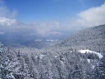 Het hoogtepunt van de sneeuwberg van pijnbomen en sparren en blauwe hemel Stock Foto