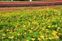 Het hoogtepunt van de weide van bloemen royalty-vrije stock afbeeldingen