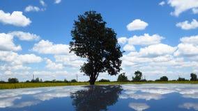 Het hoogtepunt van de de zomerhemel van witte gezwollen wolken stock foto's