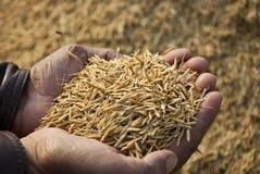 Het hoogtepunt van handen van zaden Stock Foto