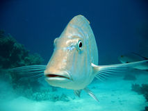 Het Hoogtepunt van het gezicht van Vissen Stock Afbeelding