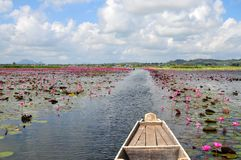 Het hoogtepunt van het meer van lotusbloem en waterlelie stock foto's
