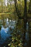 Het hoogtepunt van het moerasmeer van gevallen bladeren Royalty-vrije Stock Afbeeldingen