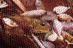 Het hoogtepunt van vissennetten van vangst stock foto