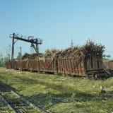 Het hoogtepunt van wagens van suikerriet stock fotografie