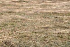 Het hooi, sneed vers gras Stock Foto's