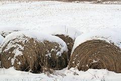 Het Hooi van de winter Royalty-vrije Stock Foto's