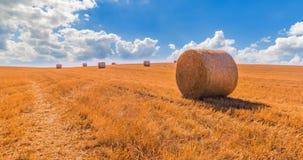 Het hooi verpakt landschap van gele grasgebieden onder blauwe hemel met witte wolken, landbouw en aard in balen en ontspant, klim stock video