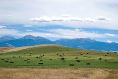 Het hooigebied van Montana Stock Afbeeldingen