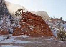 Het horizontale beeld van het één enkele gebogen pijnboomboom groeien van een zandsteenvorming met sneeuw behandelde rotsen en wi stock afbeeldingen