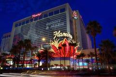 Het Hotel van de flamingo Royalty-vrije Stock Fotografie