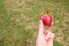 Het houden van Apple Royalty-vrije Stock Foto's