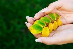 Het houden van bladeren Stock Afbeeldingen