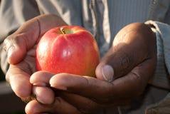 Het houden van een appel in handen Royalty-vrije Stock Afbeeldingen
