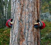 Het houden van een boom Stock Foto