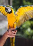 Het houden van een papegaai in de hand royalty-vrije stock afbeelding