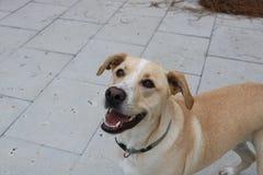 Het houden van van hond glimlacht en aanbidt beste vriend die zijn favoriet stuk speelgoed werpt Royalty-vrije Stock Afbeeldingen