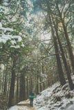 In het hout Stock Afbeeldingen