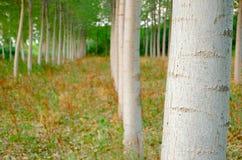 In het hout Royalty-vrije Stock Fotografie