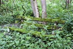 In het hout Stock Fotografie