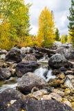 Het hout en de kreek van de herfst Royalty-vrije Stock Afbeeldingen