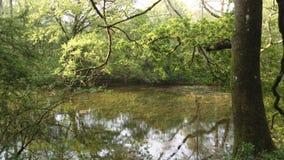 Het hout Engeland van het Chieveleydorp Stock Fotografie
